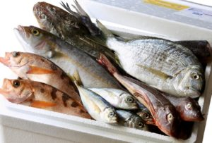 魚卓おまかせ鮮魚セット